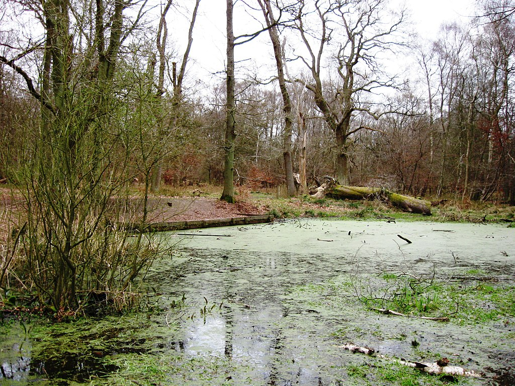 Duckweed covered pond at the end of March