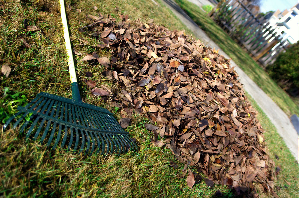 Leaf rake and leaves