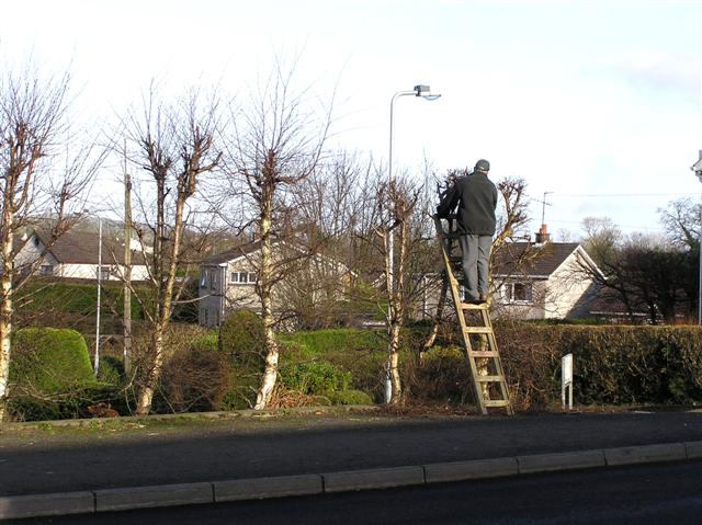 Tree pruning, Omagh