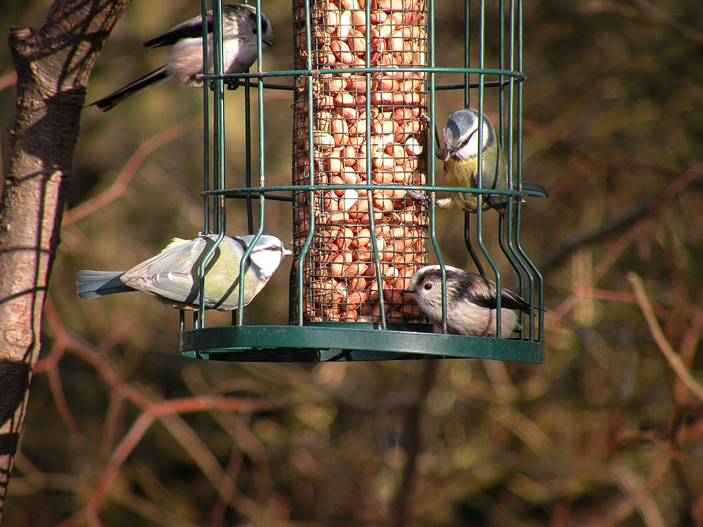 Bird feeding station at Low Barn Nature Reserve