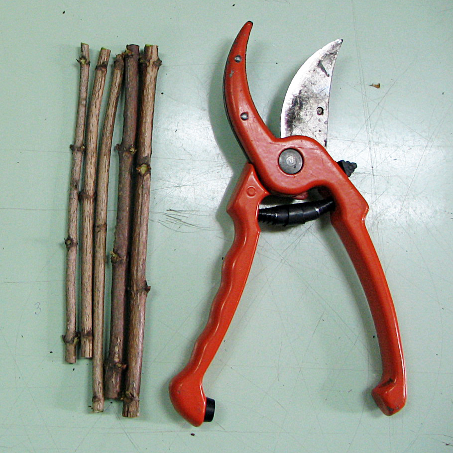 Bypass pruners and hardwood cuttings